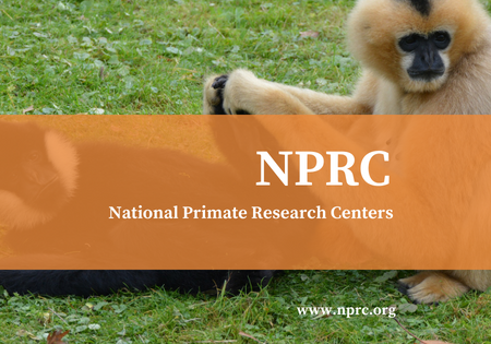 The National Primate Research Centers Debut New Website